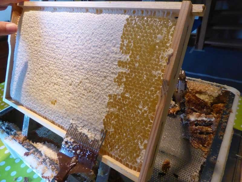 Eine Honigwabe wird entdeckelt